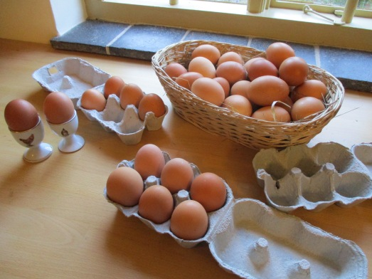 egg collection (3)