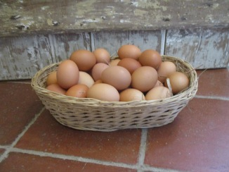 eggs in basket (1)