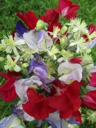 Sweet Peas Bunch
